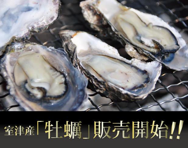 2012年収穫分室津産「牡蠣」はこちら